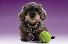 Proudly pet friendly - Mountgrange Heritage, a pet friendly letting agent