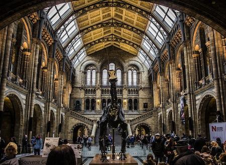 Summer activities in Kensington - Natural History Museum