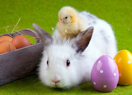 Easter Events in Notting Hill and Kensington - easter bunny with chick on its head