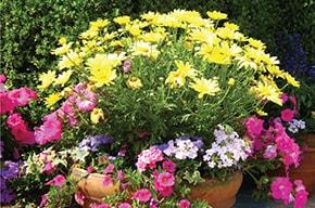 Mountgrange Our Local Friends - Florists & Gardening