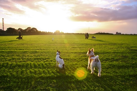 dog friendly activities, Wormwood scrubs