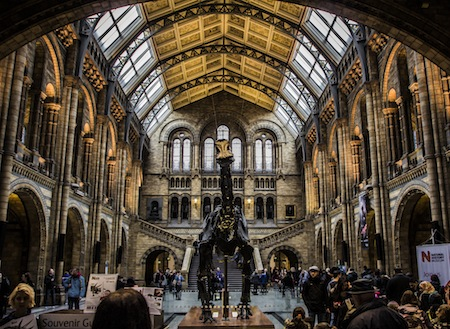Summer activities in Kensington - Natural History Museum