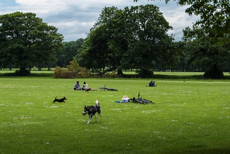 Its a dogs life, Hyde Park