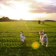 Its a dogs life, Wormwood scrubs