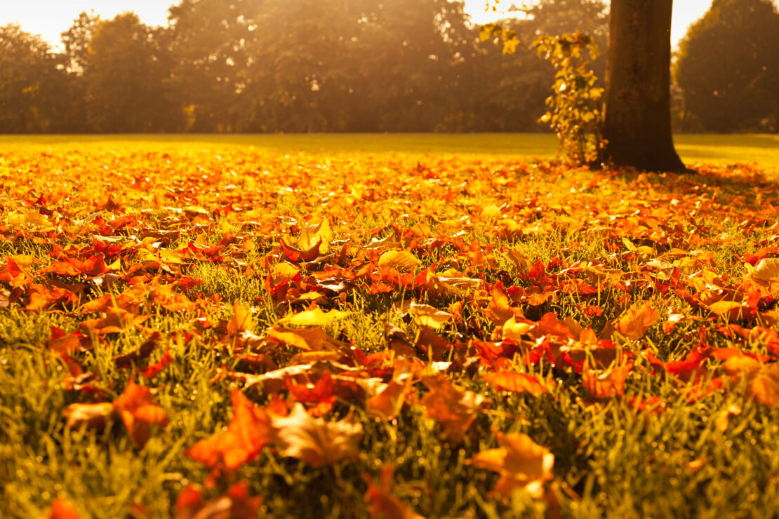 Top Tips for selling your house in Autumn