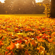 Top Tips for selling your house in Autumn - leaves on the ground at sunset