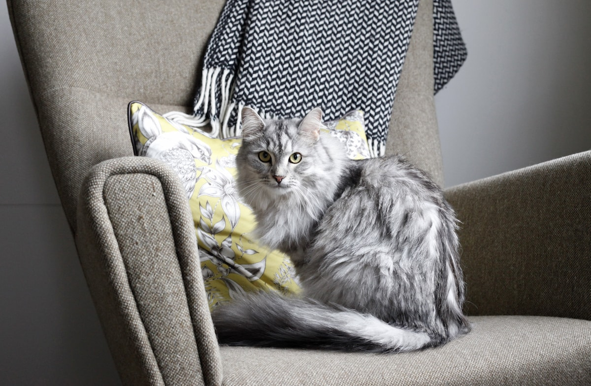 Pet friendly letting agents London - Image of a cat sitting on a chair